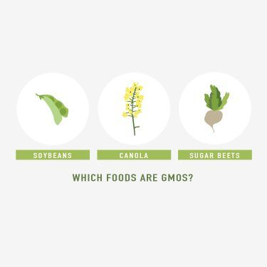 Which foods are GMOs? Soybeans, canola and sugar beets are a few examples.