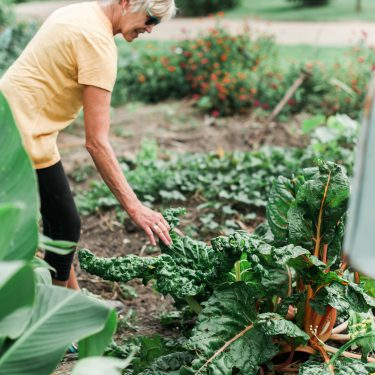 Hungry for Truth Gardening Tips