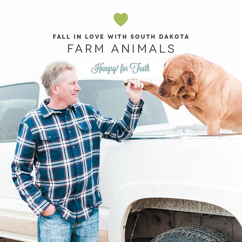 South Dakota Farm Animals Hungry for Truth