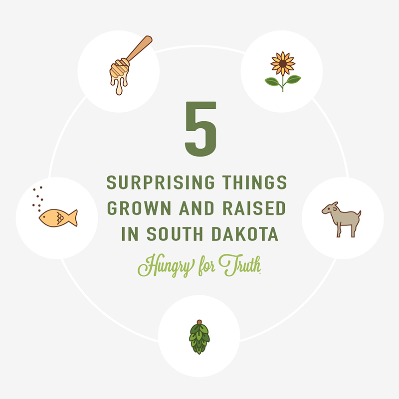 Five Surprising Things Grown and Raised in South Dakota Hungry for Truth