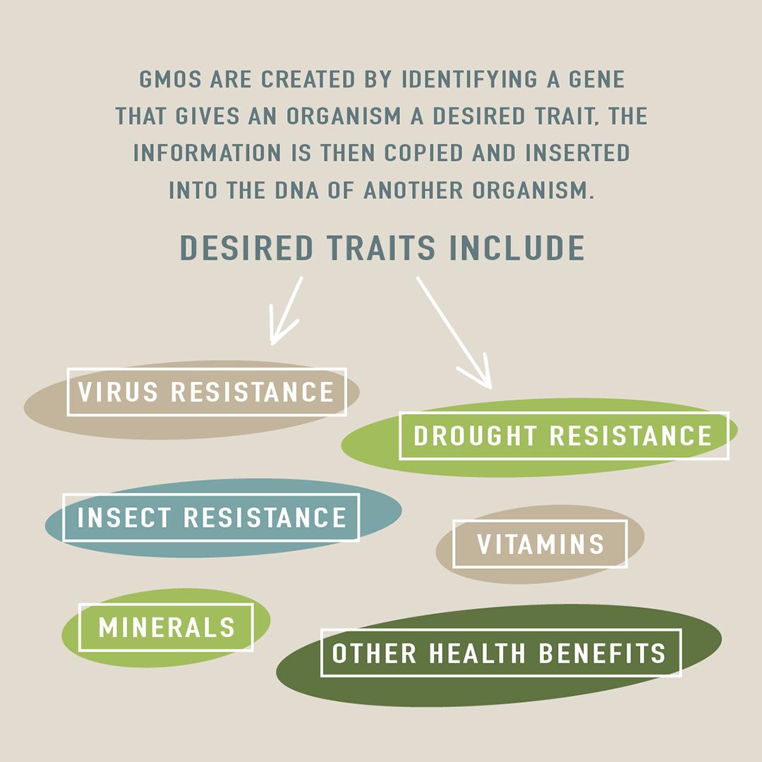 are-GMOs-safe
