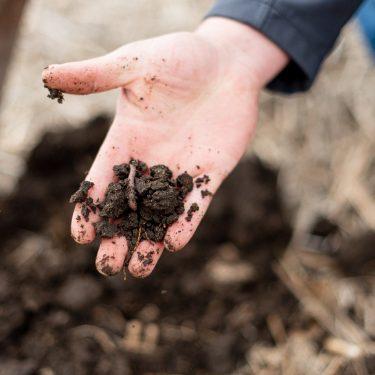 sustainable-soil