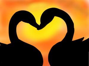 True Love Swans. 2/9/15 Online image. http://www.christinesinclair.com.au/true-love/ Downloaded 3/8/15