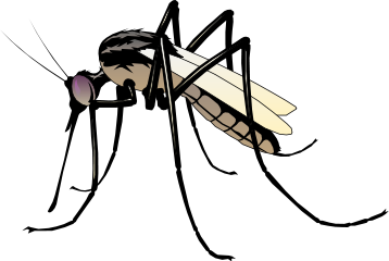 mosquito-bold-http-www-wpclipart-com-animals-bugs-m-mosquito-plfknl-clipart