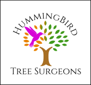 Hummingbird Tree Surgeons