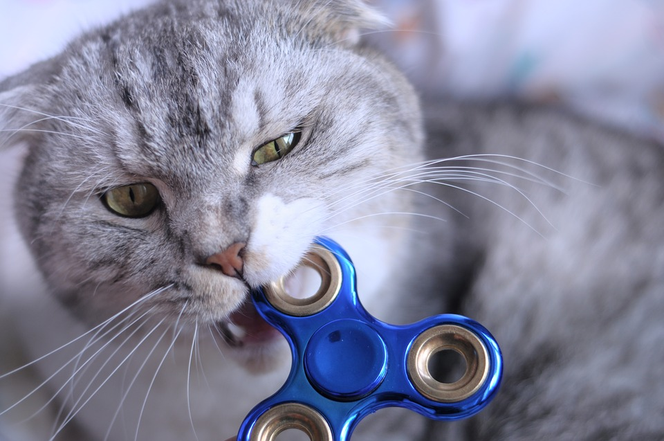 Fidget Spinner Cat Biting