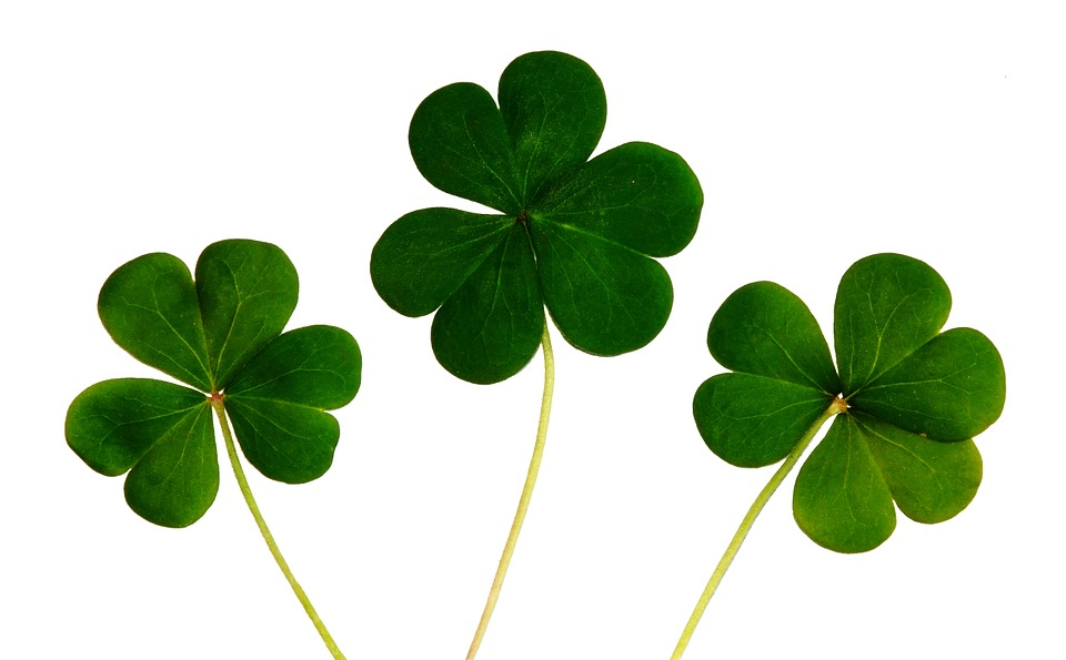 Clover Shamrocks Irish Day Luck Green Ireland
