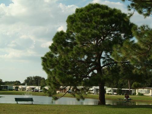 Whispering Pines Largo - MyMH