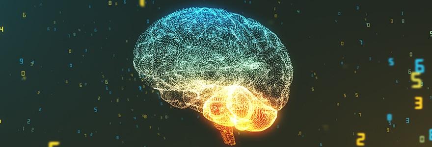 Neurociência Cognitiva: A Ciência da Aprendizagem e da Educação