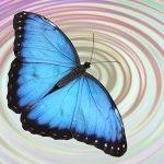 O que é Efeito Borboleta e como ele influencia nossas vidas?