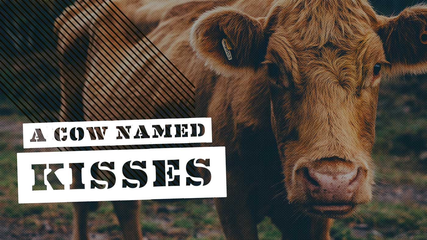 A Cow Named Kisses