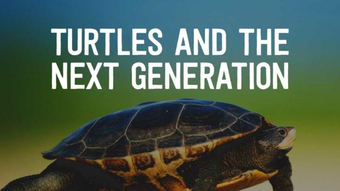 Turtles 700X394