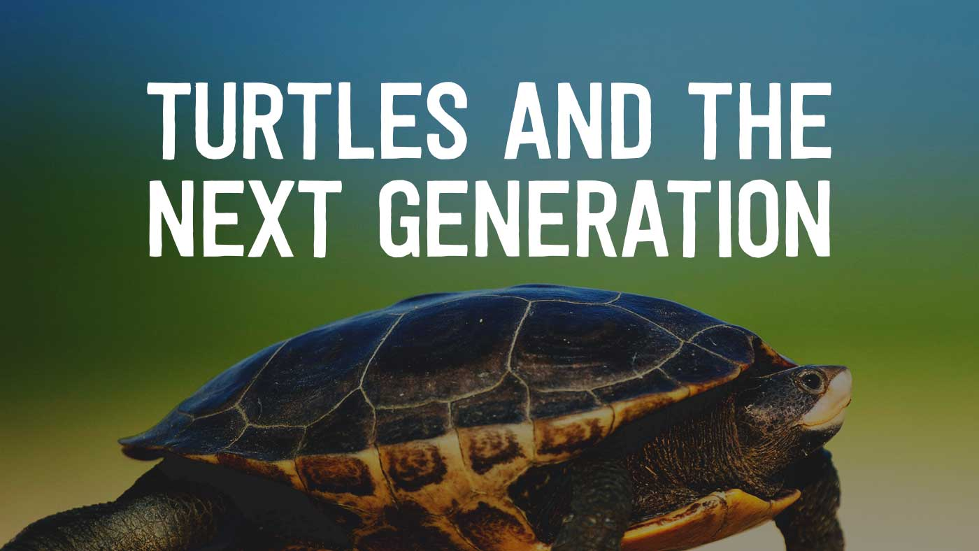 Turtles and the Next Generation