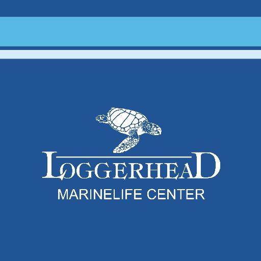 @LoggerheadMC