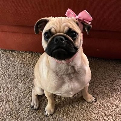 @Marty_The_Pug
