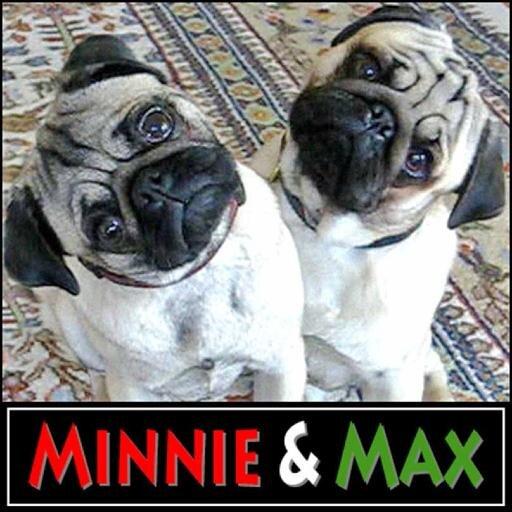 @MinnieMaxPugs