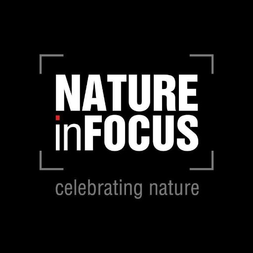 @NatureIn_Focus