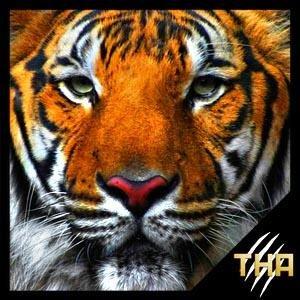 @TigerDragonBYT