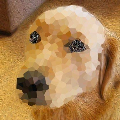 @infinite_dogs