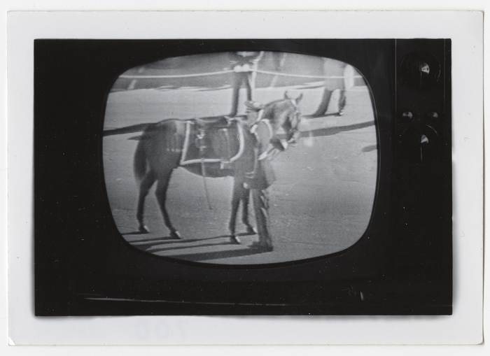[Television image of horse at John F. Kennedy's funeral]