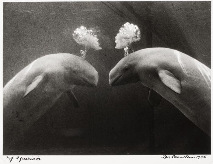 N.Y. Aquarium