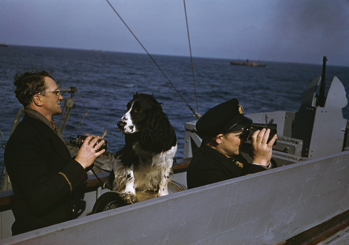 [Captain scanning the sea with his dog and chief officer on the bridge of a Norwegian freighter, part of an Allied convoy across the Atlantic from the U.S. to England]