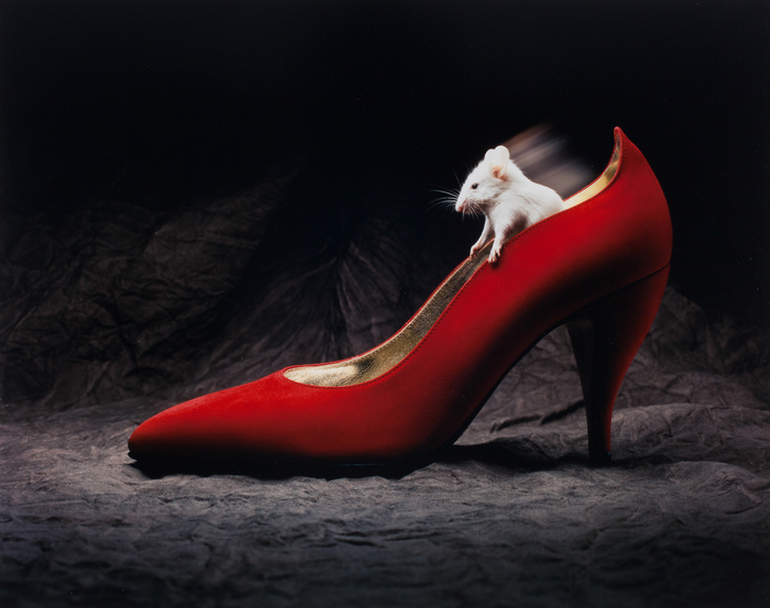 Mouse in Shoe