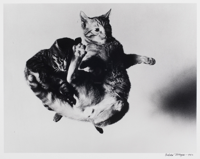 Tossed Cats