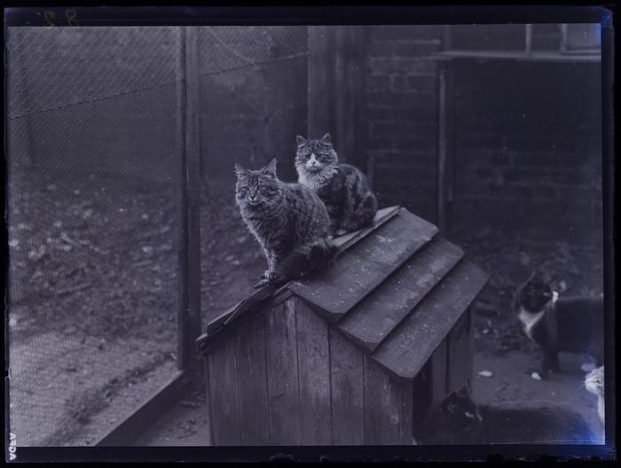 [Cats, Animals Help Society, London]