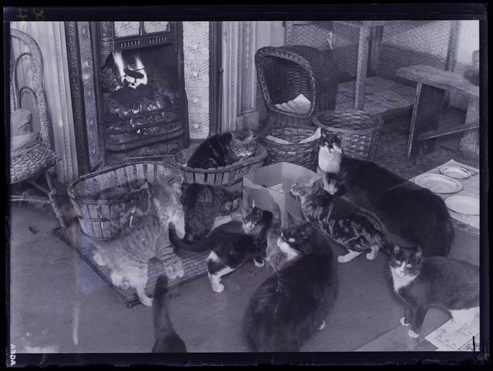 [Cats in front of fireplace, Animals Help Society, London]