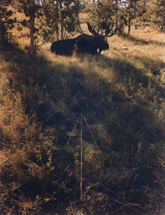 Moose and Arrow, Grand Teton National Park, WY
