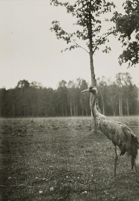 Tall bird standing on big open field