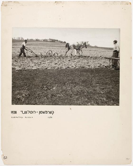 [Chaim Simcha Mechlowitz tilling his fields, Vysni Apsa, Carpathian Ruthenia] <br />