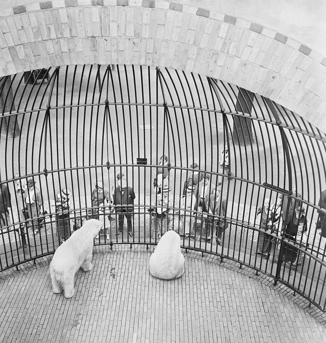 People behind bars, Berlin Zoo