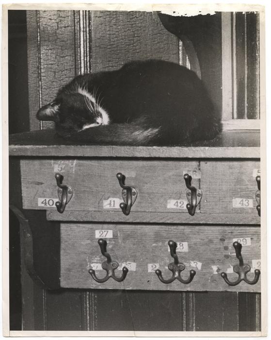 [Cat sleeping]