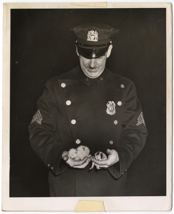 [Policeman holding kittens rescued from fire, New York]