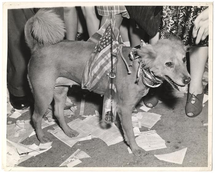 [Dog at end of war celebrations]