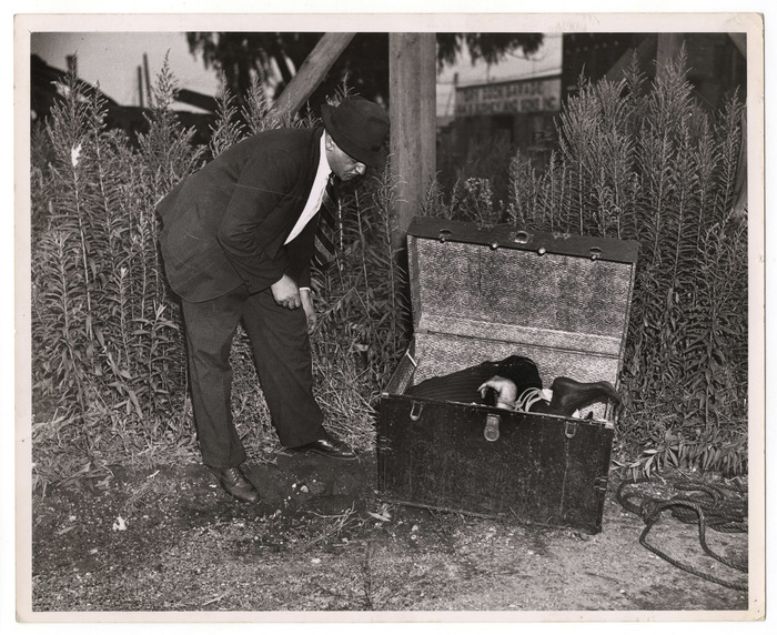 [Weegee inspecting trunk containing body of William Hessler, Brooklyn]