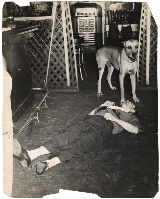 [Rocco the Great Dane with body of chef Luigi Rivieccio]
