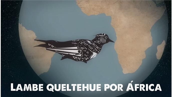 Lambe Queltehue por África