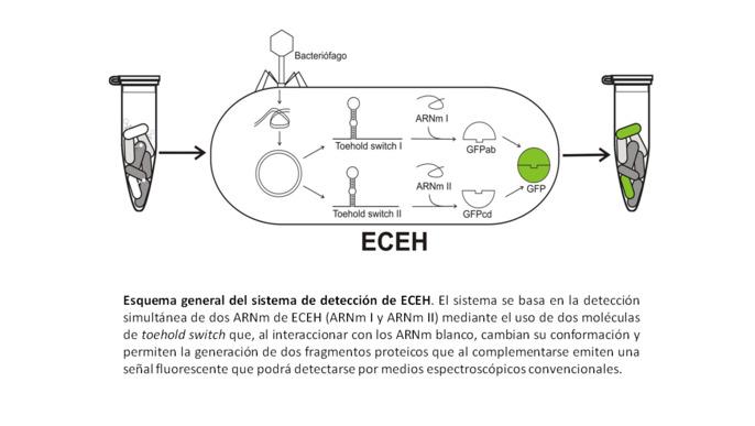 Finding E.coli