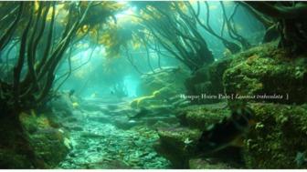 Cápsulas Biodiversidad Marina