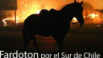 Fardoton x Chile