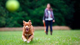 Refacción de refugio de perros