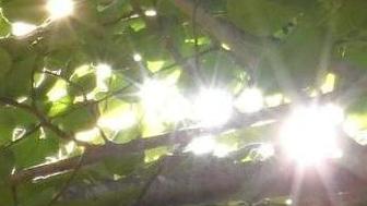 Dar luz al bosque nativo de Nahuelbuta!!