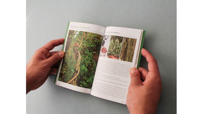 Bosques nativos del Biobío