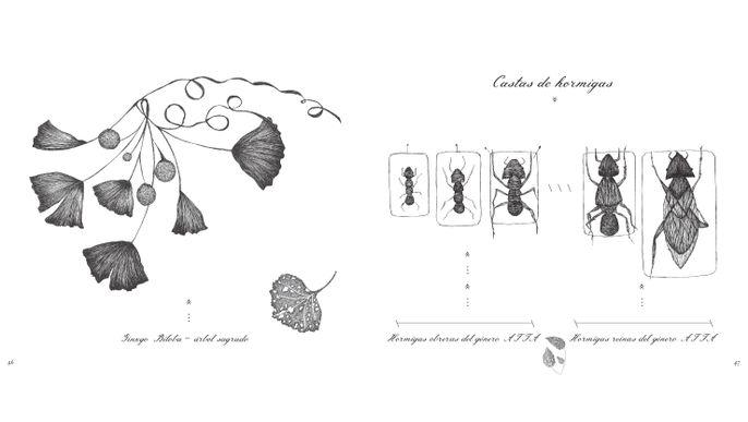 RARA AVIS: Libro álbum