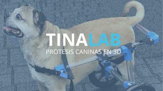 TINA PROTESIS CANINAS
