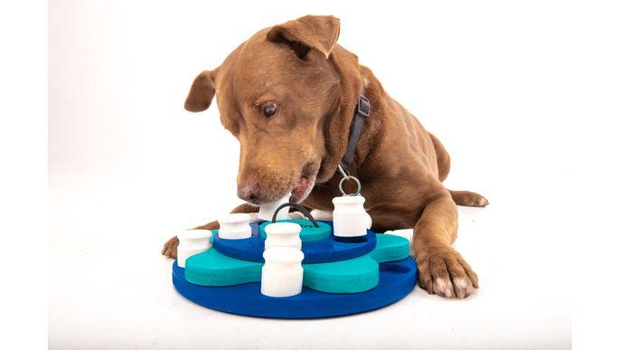 ican - Inteligencia Canina