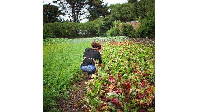 Medicina basada en Agricultura